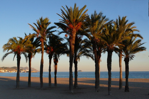 Palmen am Strand Spanien