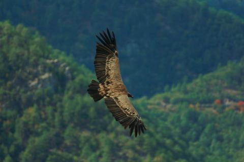 Geier im Flug, Landschaften und Natur